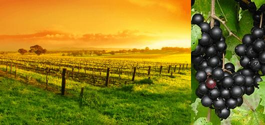 Katya Vineyards - Wine Tasting and Pairing - Gourmet Food